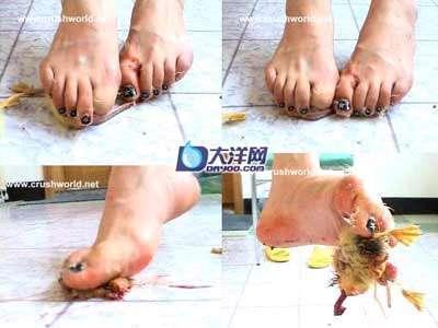 女子光脚踩死幼鸭图片网上流传组图