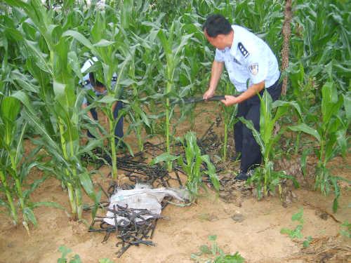 偷拍女尿尿_盗贼遇民警一头扎进玉米地 谎称小便蒙混过关