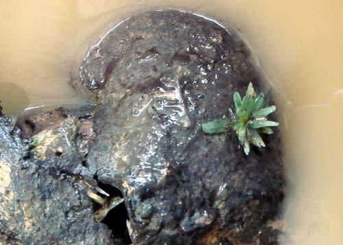 动物 龟 矿物岩石 500_357