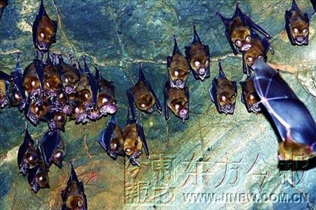 这种复杂的洞内结构,为蝙蝠形成了良好的栖息场所.