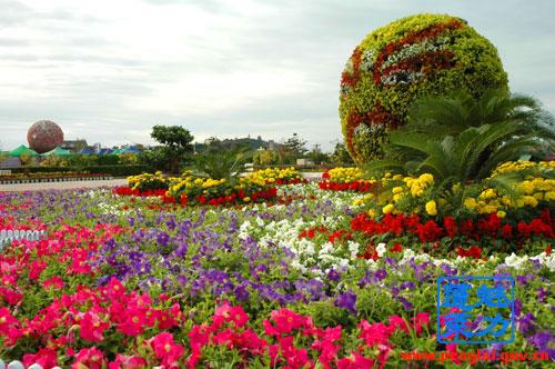 国庆花卉摆放设计