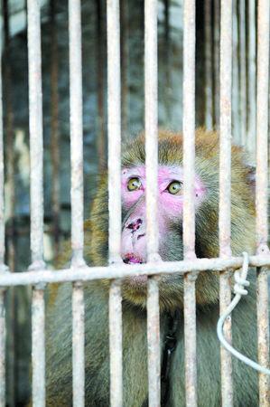 在郑州市动物园猴山