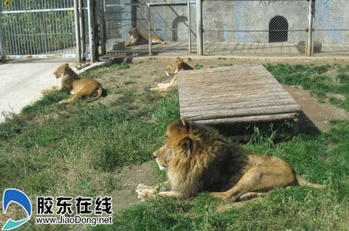 大青山野生动物园是呼和浩特市迎接内蒙古自治区成立60周年大庆的