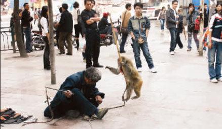 中东操逼囹�a�il_猴子被逼当街表演操刀举棒打晕耍猴人(图)