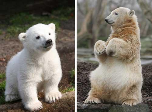 德国一男子闯动物园北极熊舍