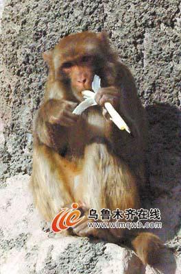 野生动物园大象泡脚猴子吃葱(组图)