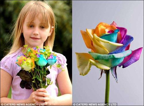 彩虹色玫瑰成昂贵的幸福花(组图)