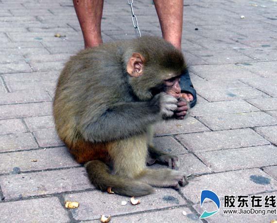 猴子吃花生 受到宠物狗当街调戏(组图)