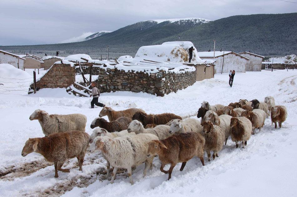 新疆哈密北部巴里坤草原普降中雪(组图) 各地新闻 网
