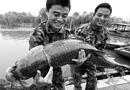 """东昌湖捞出1.6米""""青鱼王"""" 109斤估计有30多岁"""