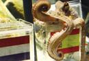 世界杯神奇章鱼帝保罗死亡 八场全中奇迹难再现