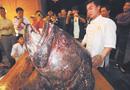 渔民捕到宽1.1米长2.5米野生鱼 重达542斤(图)