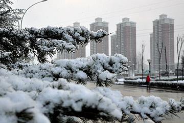 烟台迎来今冬第一场降雪(图)