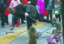"""街头卖艺人鞭打猴子遭群起""""反攻""""(组图)"""