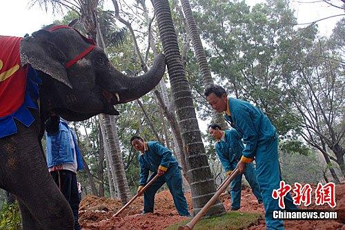 深圳 大象也来植树了