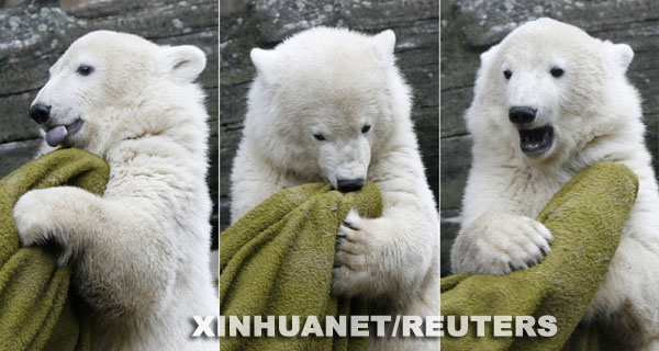 组图:德国柏林动物园明星北极熊猝死 原因不明