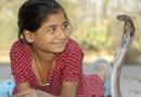 印度女孩与眼镜王蛇同吃睡 被咬仍亲密无间(图)