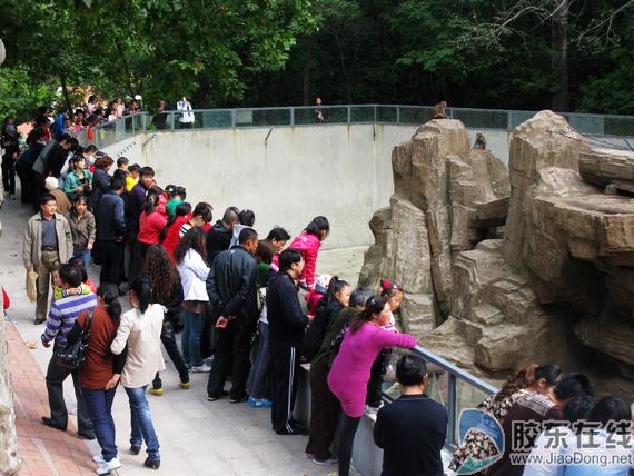 """动物园游客扎堆""""花果山"""""""