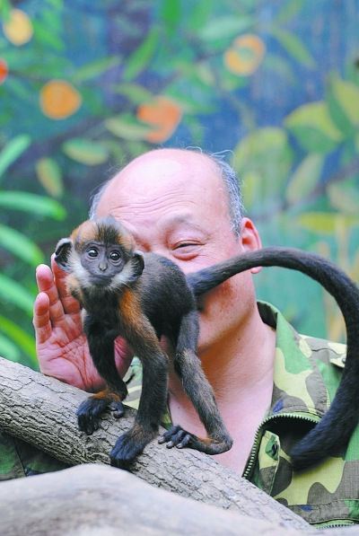 保育员舔猴屁股 猴子不排便全赖游客?