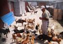 记者探营小动物保护中心3000多只狗要断粮(图)
