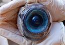 专家析美国海滩神秘巨型眼球属于掠食性剑鱼(图)