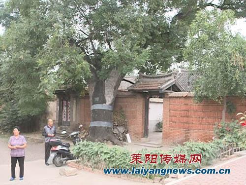 门前大树500年赵老汉犯了难法院依法来裁判