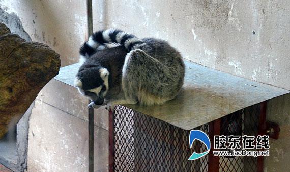 烟台南山公园动物园怕冷的动物装上了暖气