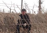 村民忙着拾掇葡萄枝 莱州酿酒葡萄销路不愁(图)