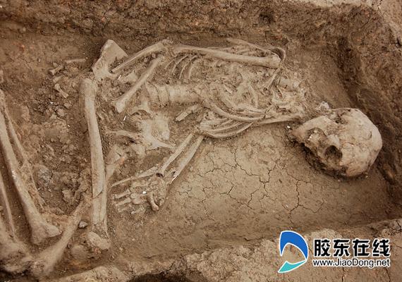 骨骼保存完整