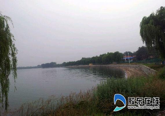 """胶东在线网6月18日讯(特派记者 侯嘉伟) 提起潍坊你会想到什么?风筝?蔬菜?白浪河?其实不止这些。翻开潍坊的地图,有一颗璀璨夺目的明珠不知您是否发现,她的名字叫峡山湖。18日下午,参加""""聚焦美丽山东——第九届中国网络媒体山东行""""的记者们来到了峡山湖国家湿地公园,领略了她的婀娜与风采。   """"烟雨苍茫美景汇,遍野青绿似春归"""",这句词用在这里恰当的很。风光旖旎的峡山湖是山东省最大的水库,是一座集防洪、灌溉、发电、水产养殖、城市及工业"""