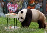大熊猫小熊猫烟台南山公园过生日(图)
