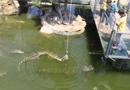 """常州动物园开放""""钓""""鳄鱼让民众体验(组图)"""