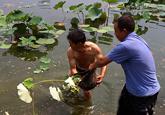 南山公园人工湖爆发蓝藻 投放5万尾鱼净化水质