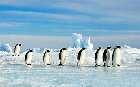 探索南极体验一次终身难忘的旅行