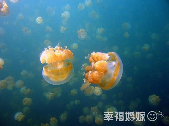 在海水里漂啊漂,极其美丽然而极其危险的浮游动物