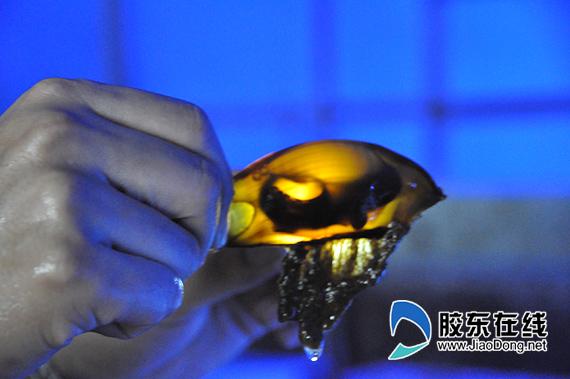 鲸鲨馆海洋生物繁育成果展将在国庆期间开放