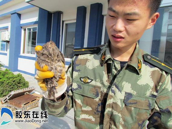 被救下的小猫头鹰