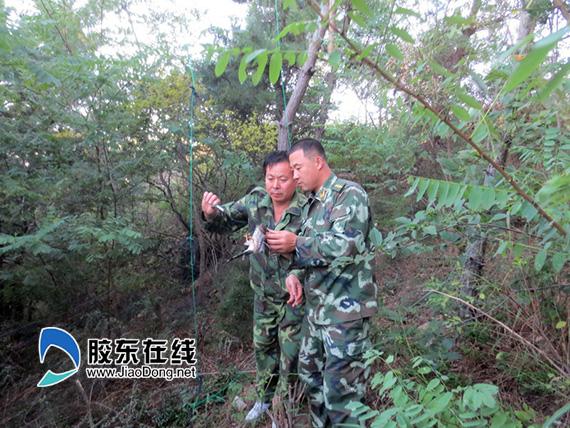 民警从捕鸟网上救下被困鸟类