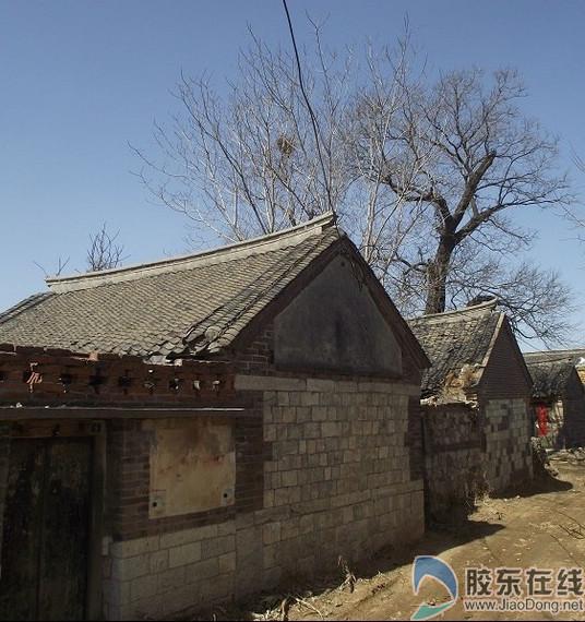 战场泊村老树底下的这些老屋当年住着许司令的警卫排