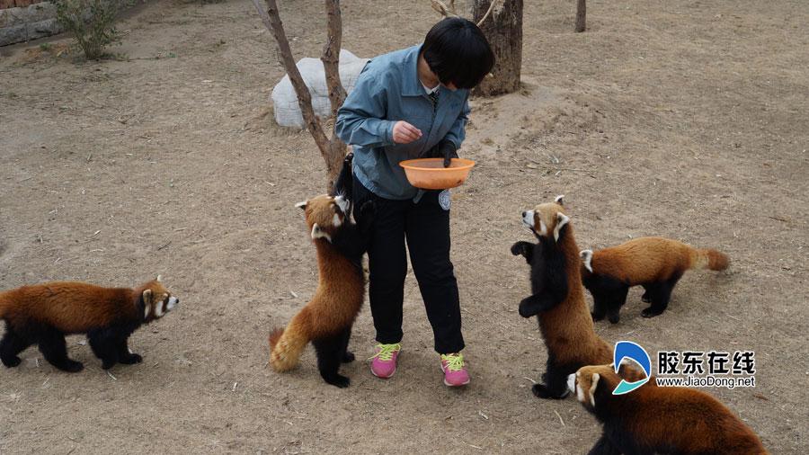 动物饲养员_动物饲养员干一行爱一行工作起来常忽视女儿
