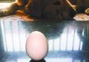 """""""立蛋""""比赛:女网友一口气让46个鸡蛋立正"""