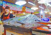 青岛渔民捕到长2.1米重226斤巨型剑鱼(图)