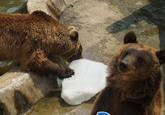 桑拿天动物园里忙降温 洗澡SPA享受特制冰激凌