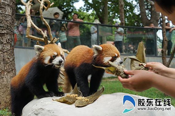 南山公园·动物园