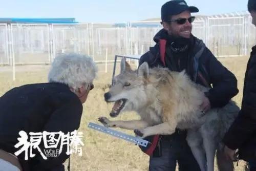 狼图腾出发 开始全国各国的图腾之旅