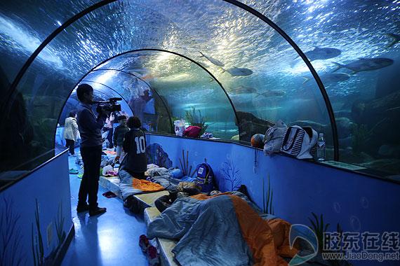 """体验蓬莱海洋极地世界""""奇妙夜"""""""