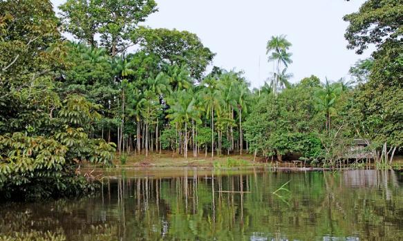 原始森林,最丰富的植物种类和最珍稀的野生动物