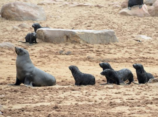 纳米比亚最可爱的十种小动物