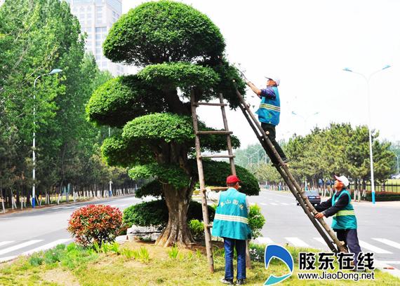 修剪树木的好处