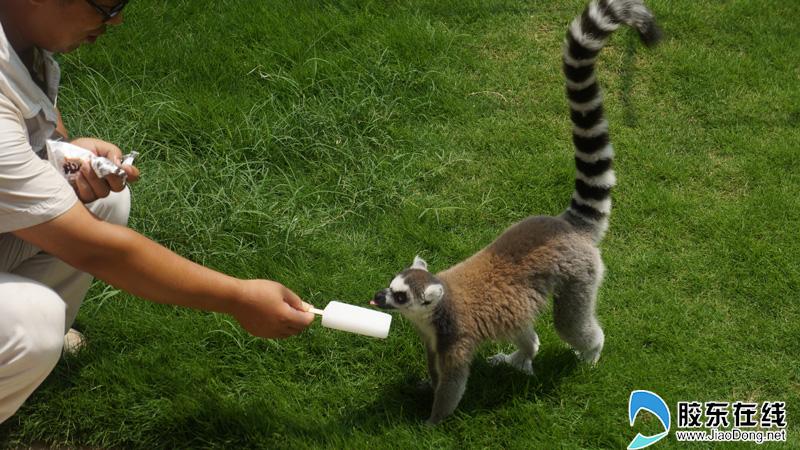 烟台动物园小动物们防暑妙招